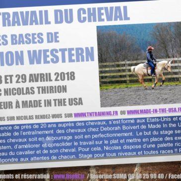 Stage Travail du cheval sur les bases de l'équitation western