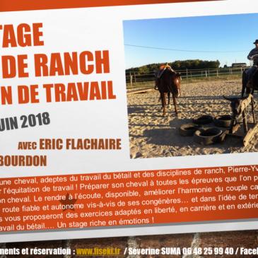 Stage : Cheval de ranch, équitation de travail