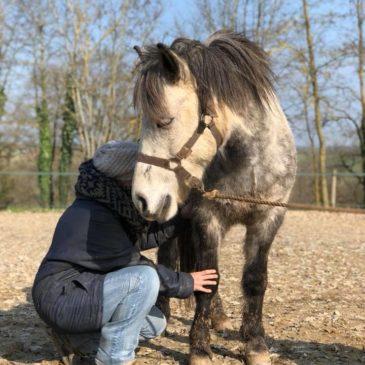 Shiatsu, un nouveau soin pour vos chevaux !